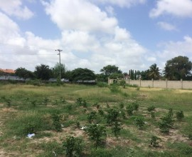 Large Rich Land for Rent