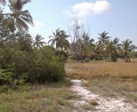 LAND FOR SALE ON MAFIA ISLAND